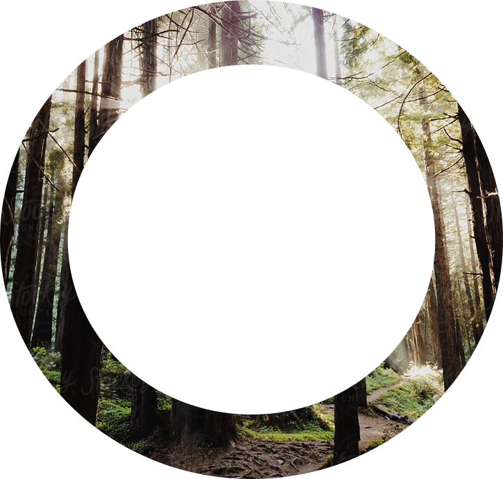 kyo terra projet domiciliaire nature cercle foret